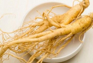 جینسنگ؛ گیاهی که مورد قبول علم نوین پزشکی است