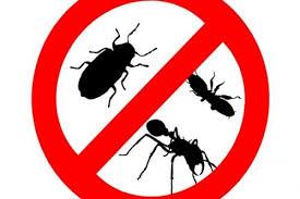 ازبین بردن حشرات خانگی