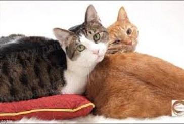 سفره عدالت و سهم گربههای اشرافی!