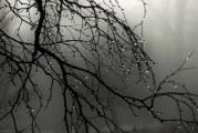 وزش باد شدید و رگبار در ۱۶ استان/ ورود سامانه جدید بارشی از یکشنبه