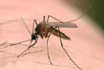 بلایی که نیش پشه بر سر سیستم ایمنی بدن میآورد