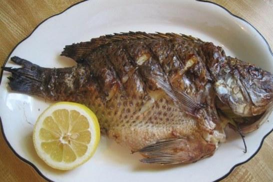 آیا می دانید ماهی پرطرفدار تیلاپیا چه بلایی بر سر شما میآورد؟/هرگز این ماهی را نخورید