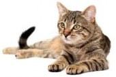 متولدین سال گربه در طالع بینی چینی