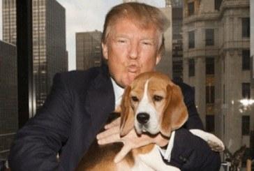 ترامپ یک سگ دوست داشتنی و با ارزش است یا یک سگ بی ارزش و مورد تنفر؟