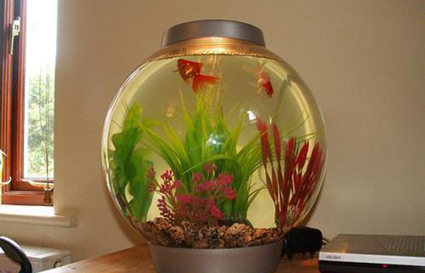 تراریوم ماهی