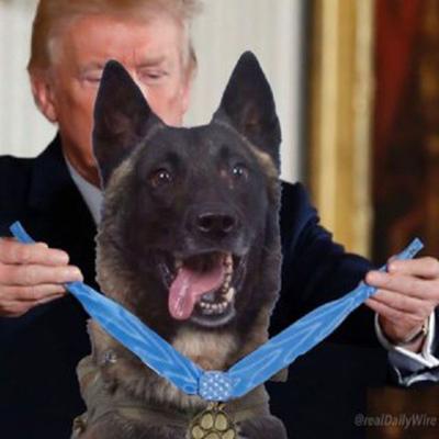 دونالد ترامپ به سگ یابنده ابوبکر بغدادی مدال شجاعت اهدا کرد