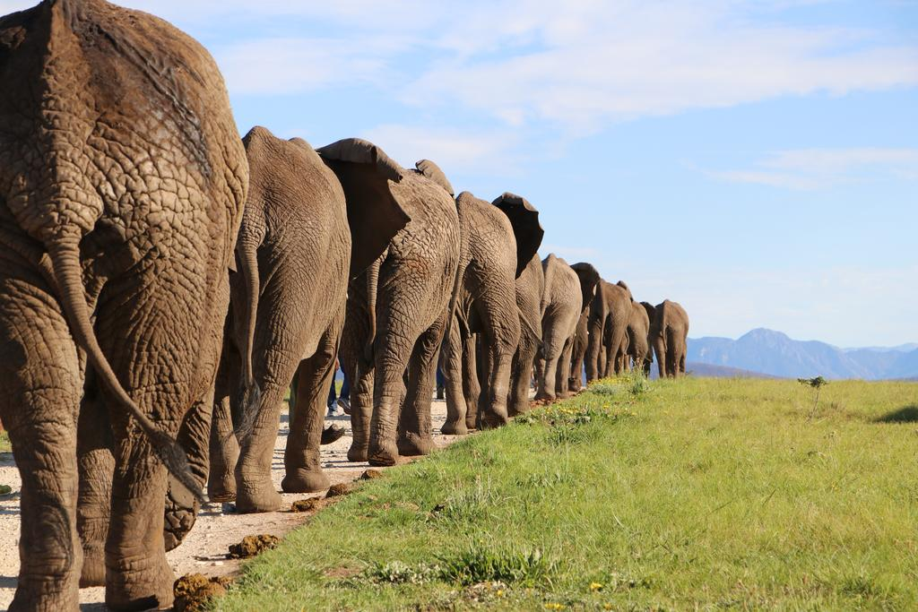 Elephant، فیل، ریه، عجایب، عجیب ترین حیوانات