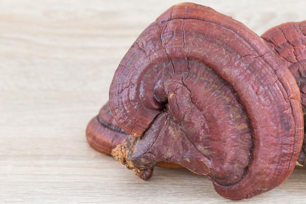 قارچ گانودرما و کبد چرب ، درمان کبد چرب با قهوه گانودرما