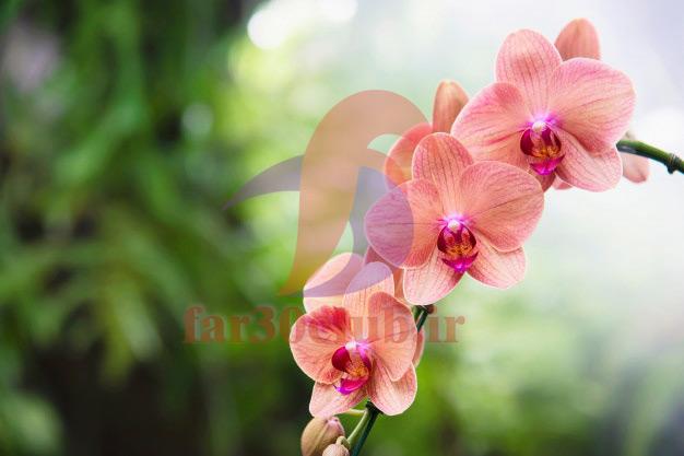 دانلود عکس گلهای بسیار زیبای جهان ، زیباترین عکس گلهای بسیار زیبای جهان