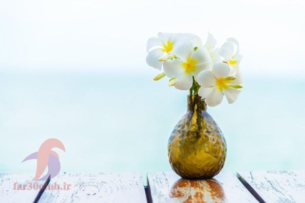 گل یاس اناری ، گل یاس بنفش