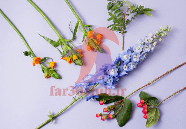 عکس گلهای بسیار زیبای جهان خارجی ، عکس گلهای بسیار زیبای جهان اسامی
