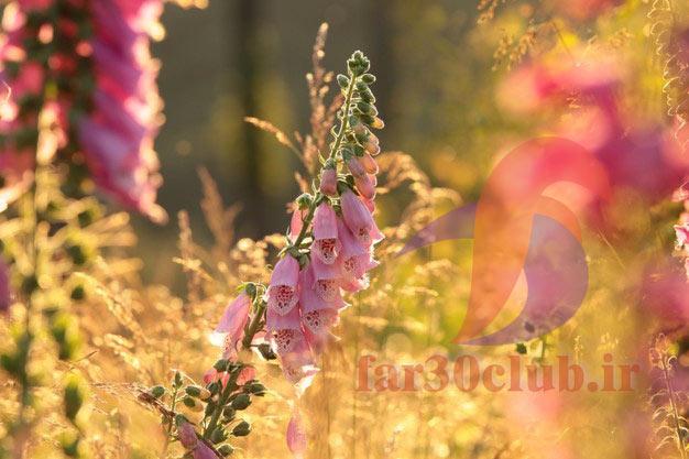 عکس گلهای بسیار زیبای جهان ایتالیایی ، عکس گلهای بسیار زیبای جهان اینستا