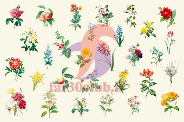 انواع گل درمانی ، معرفی انواع گل